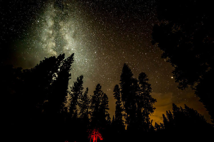 Star light, star bright... Camping Galaxy Pine Starlight Astronomy Astrophotography Beauty In Nature Forest Galaxy Low Angle View Milky Way Nature Nebula Night No People Outdoors Scenics Silhouette Sky Star - Space Starry Stars Starscape Tree Universe