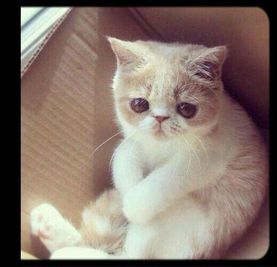 Cat♡ Yavru Kedicik Tatlisey