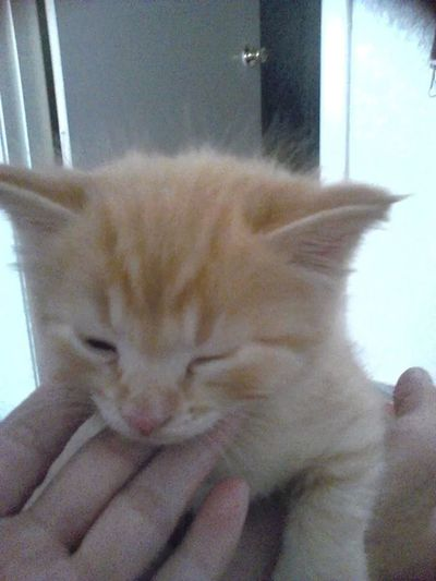 Pubby when he was a baby. Cute Cat So Adorable Playful Cat