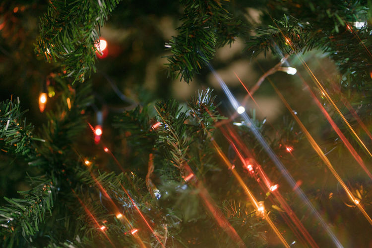 Christmas greetings Tree Christmas Illuminated christmas tree Celebration Holiday Christmas Decoration Plant Decoration Christmas Lights No People Nature Christmas Ornament Close-up Green Color Night Branch Glowing Celebration Event Outdoors Light Pine Tree Coniferous Tree Fir Tree