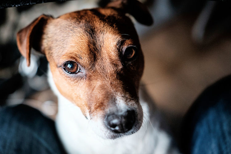 It's time to take care of me... Animal Animal Head  Dog Domestic Animals FUJIFILM X-T1 Looking At Camera One Animal Pets