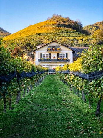 Green Yellow Autumn Vineyard Architecture Building Exterior Built Structure Plant Building Grass Nature House No People Outdoors Field First Eyeem Photo