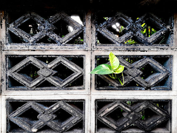 Shout out to all the flowers growing in concrete. Pattern Backgrounds No People Star - Space Outdoors Cement Leaf Peeping Grey Color Grainy Wall - Building Feature Wall Udonthani Thailand Adapted To The City