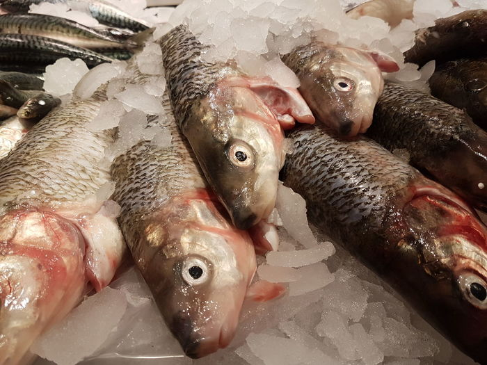 Fish Large Group Of Animals Food Porn Background Frozen Photography Cold Temperature Animal Themes Fish Market Fishing Food Food Photography Fresh Produce Fresh Fish Market Eat Fish Fish Presentation Food Production Street Market Street Food Market