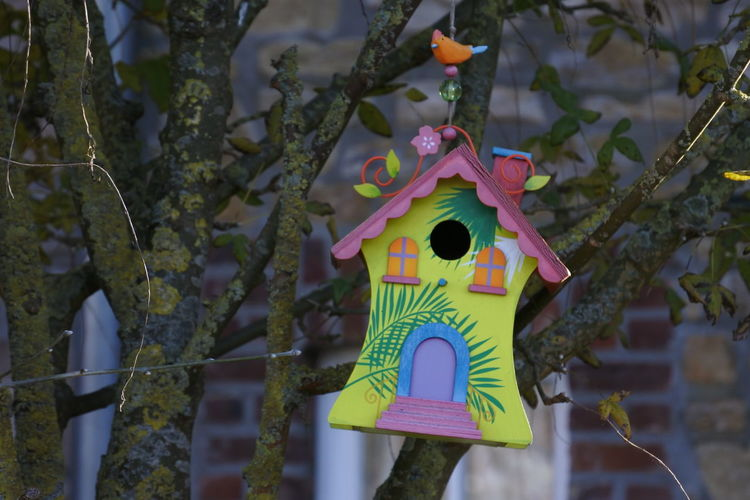 Bird House Colorful Cute Tree Water Close-up