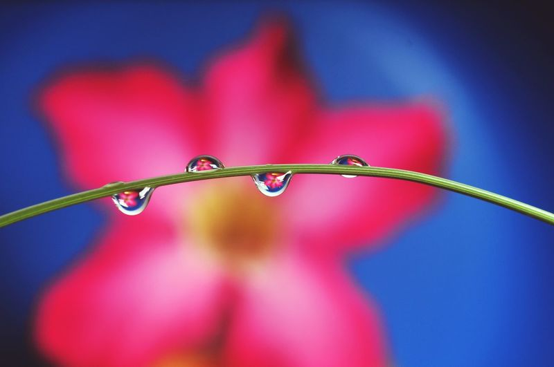 Close-up of water drops on blue flowering plant
