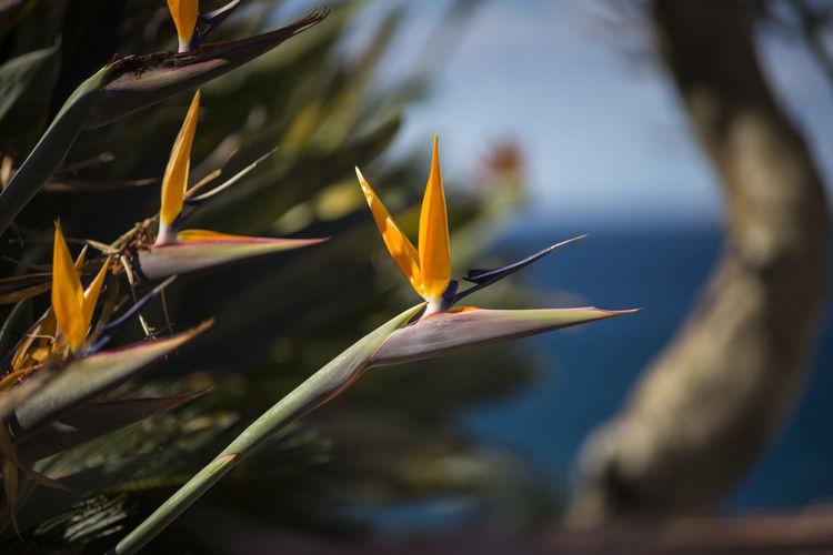 [•] Bird of Paradise Birdofparadise Flower Flowering Plant Plant Birdofparadise CanonFD  Flower