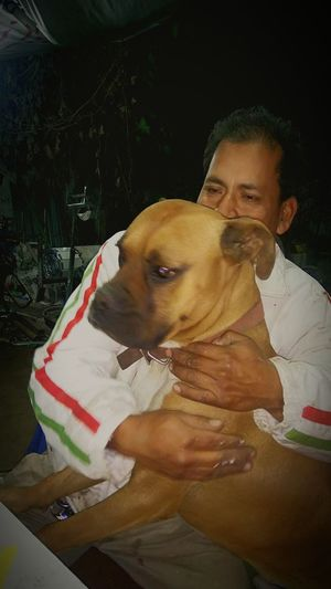 Dogs Dog Love Animals Perro Boxer Dogs Lealtad