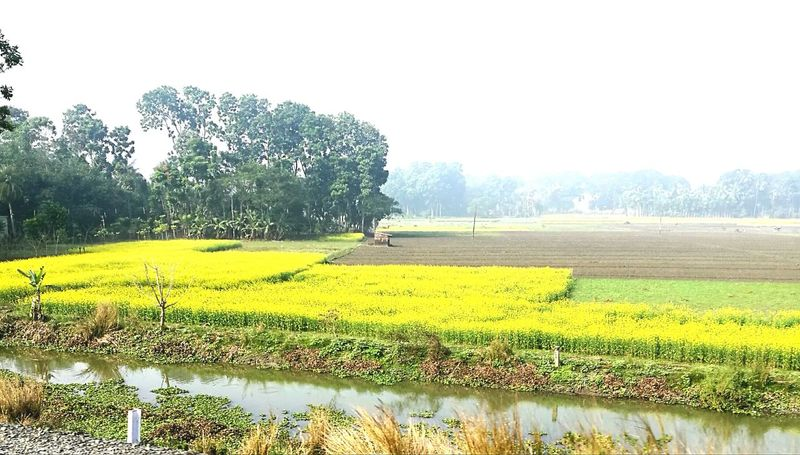 Agriculture Rural Scene Farm Nature Growth Field Yellow Mustered Filed Photography Landscape Sky No People Freshness