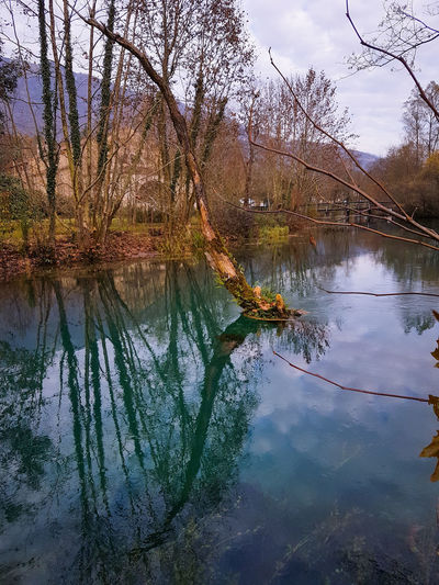Water Tree Flood Lake Reflection Mountain Sky