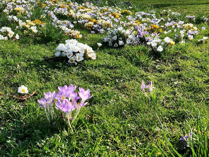 Flowering Plant Plant Flower Freshness Growth Beauty In Nature Grass Field Fragility Land Vulnerability  Nature Day No People Green Color Petal Flower Head Inflorescence White Color Outdoors Purple Iris