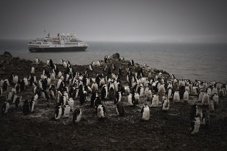 Penguins by sea against clear sky at dusk
