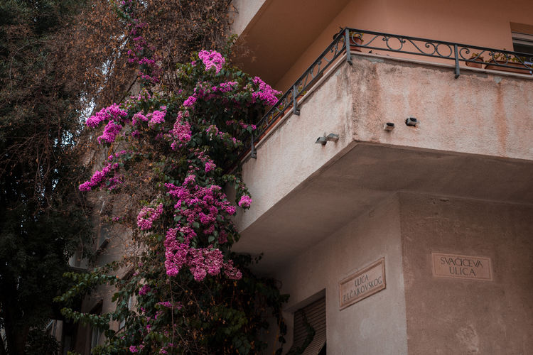 Croatia Architecture Building City Day Europe Exterior Flower Flowering Plant Growth Location Low Angle View Nature Neighborhood Outdoors Summer