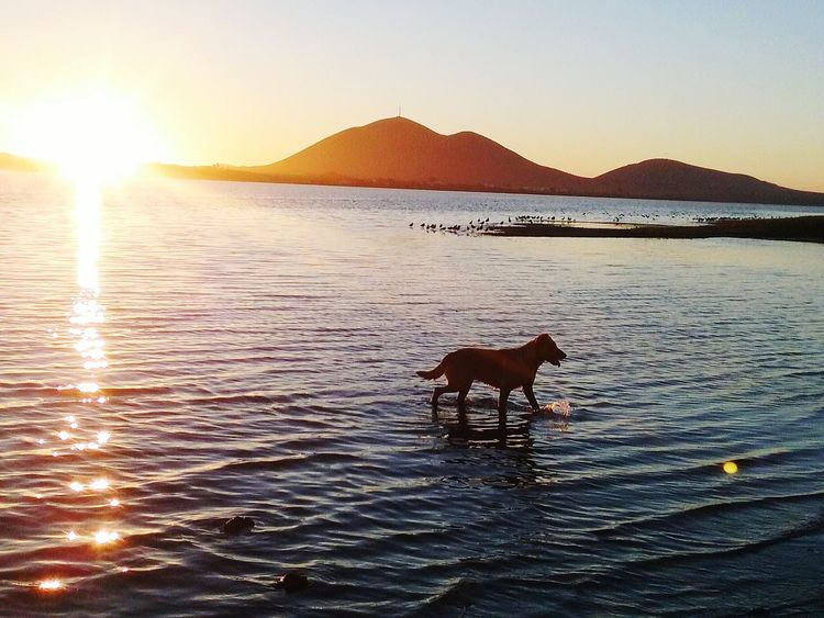 Sunset Outdoors Animal Pets Water Animal Wildlife Sea Nature Scenics Beauty In Nature Dog Animal Themes Day Mountain Sky