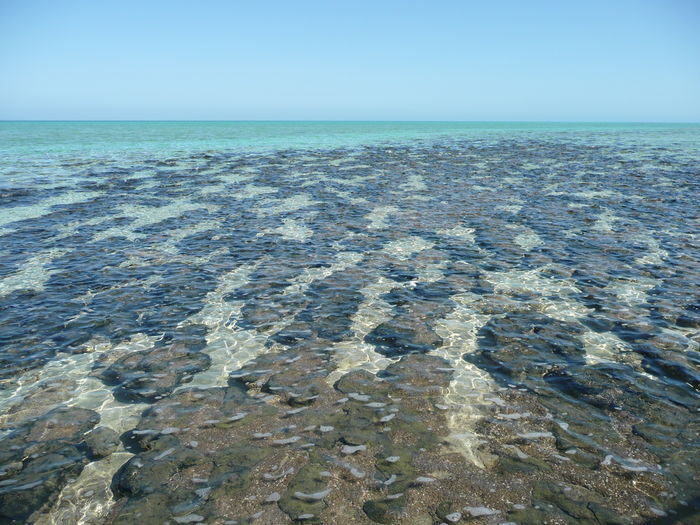 Foundation of Life Beach Beauty In Nature Beginings Of Life Blue Clear Sky Day Geology Horizon Over Water Live For The Story Nature No People Outdoors Paelentology Scenics Sea Shallow Sky Stromatolites Stromatolites Cyano Bacteria Tranquil Scene Tranquility UNESCO World Heritage Site Water