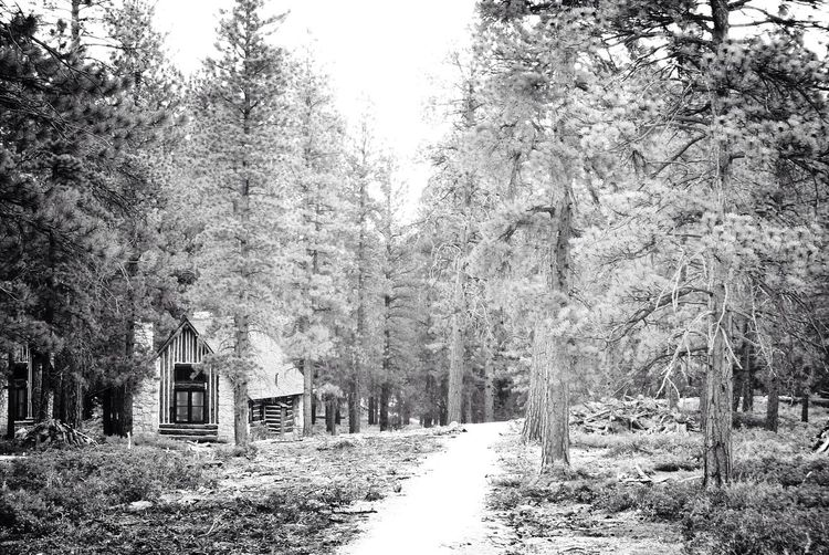 Cabin In The Woods In The Forest