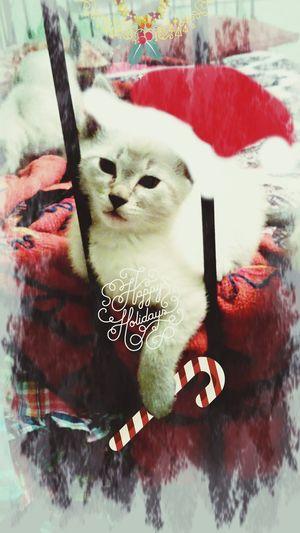 Just for fun! Happy Holidays Pixlr People! Pixlr Pixlr PixlrEffects PixlrExpress Pixlrapp Pixlr Edit Pixlrchallenges Pixlromatic Pixlredit