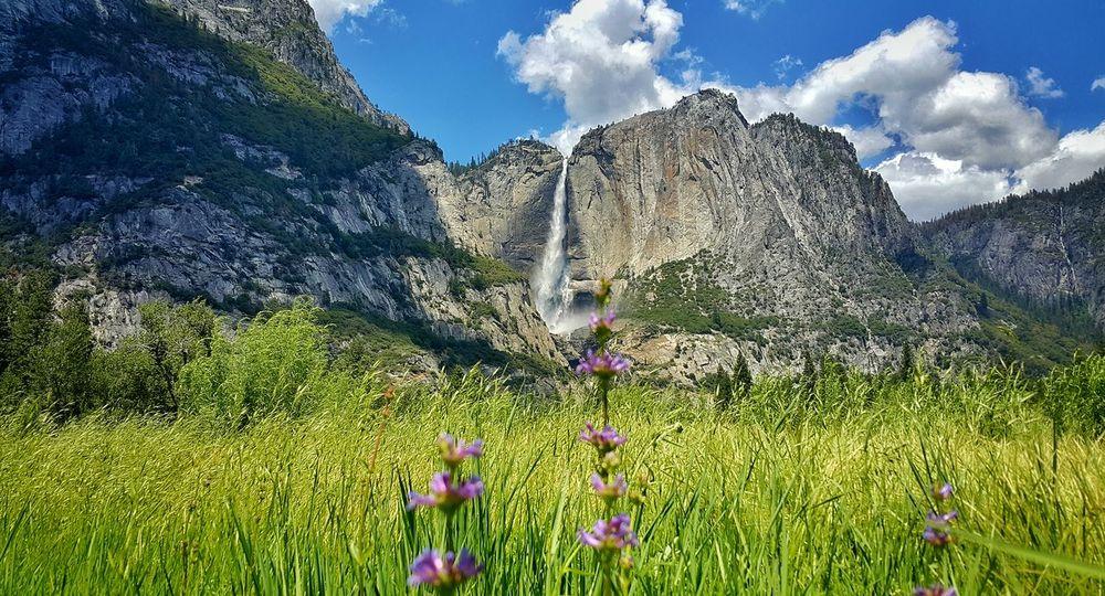 Yosemite National Park Yosemite Yosemite National Park Yosemite Valley Yosemite Fall Waterfall Scenery Greenery
