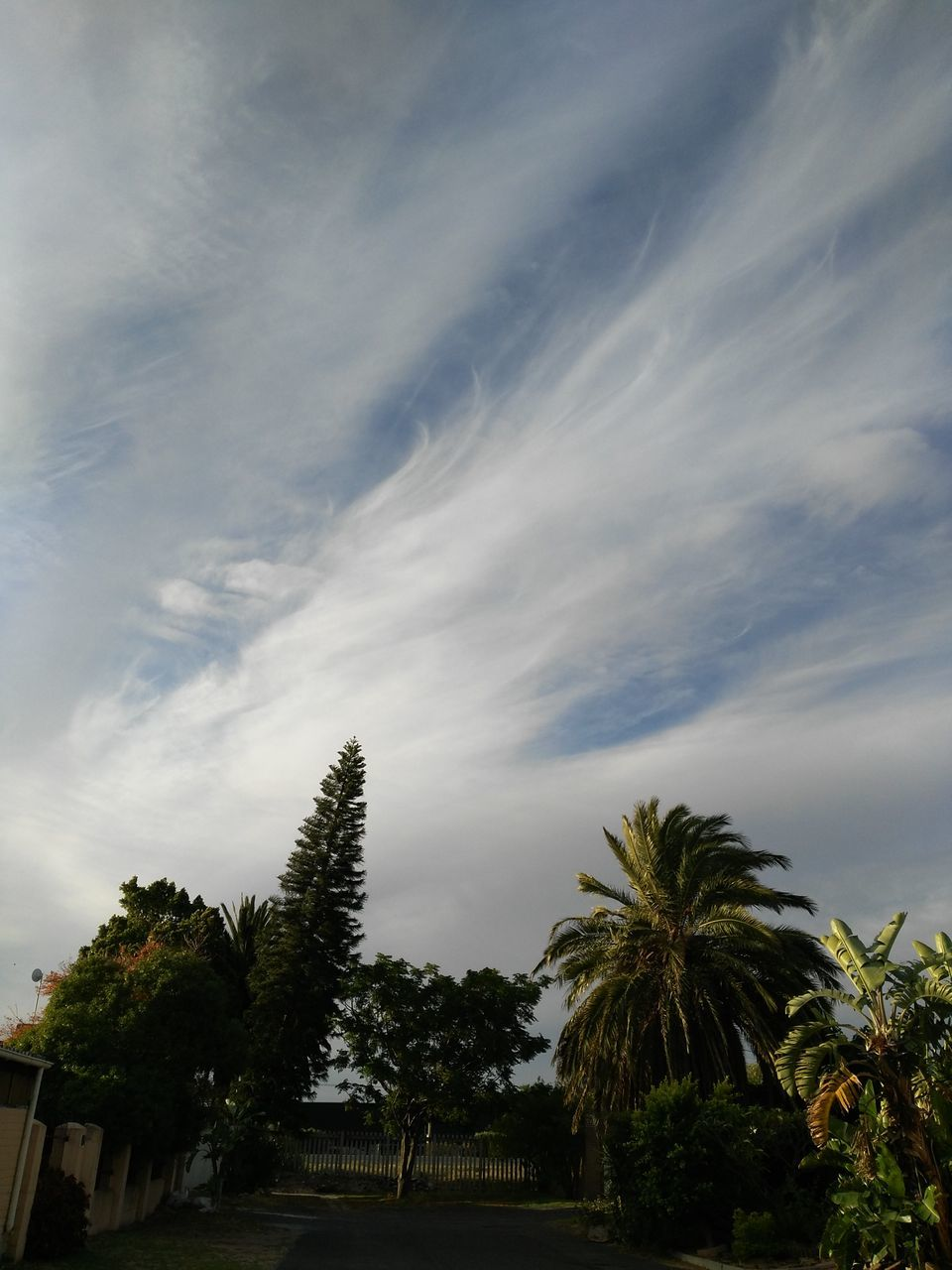 tree, sky, cloud - sky, nature, no people, beauty in nature, scenics, tranquility, palm tree, growth, low angle view, outdoors, day