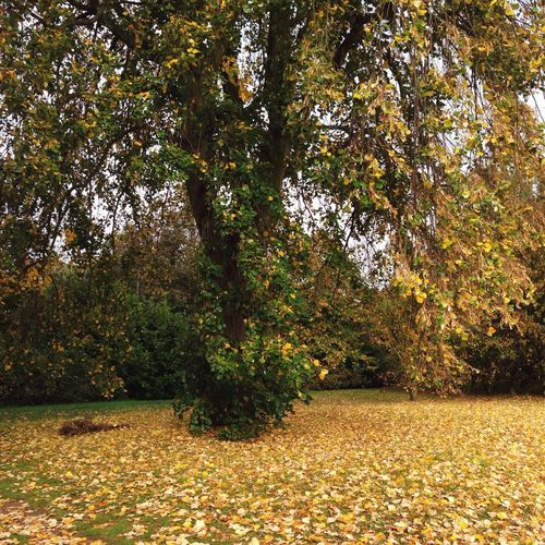 Days of autumn Autumn Colors EyeEm Nature Lover EyeEm Best Shots