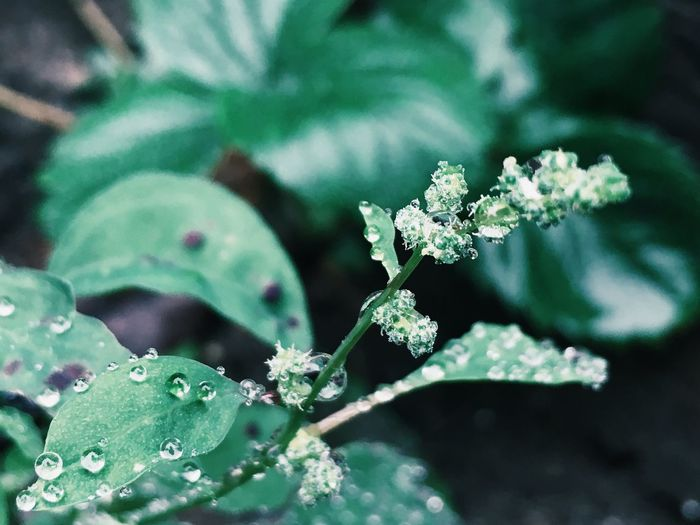 Nature Macro Macro Beauty Green Rain Check This Out Up Close No People Simplicity