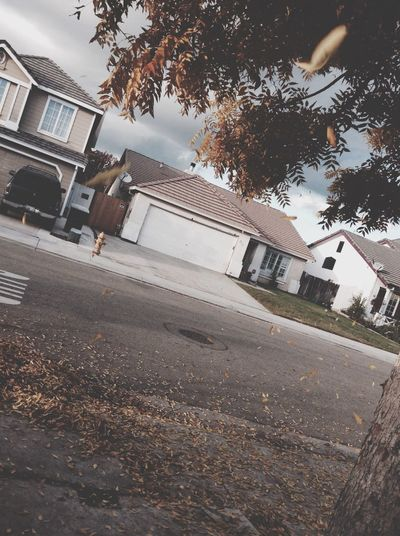 Fall Leaves Hello World Taking Photos Breeze Alone... Stockton Life ❤️💜💙💚💛