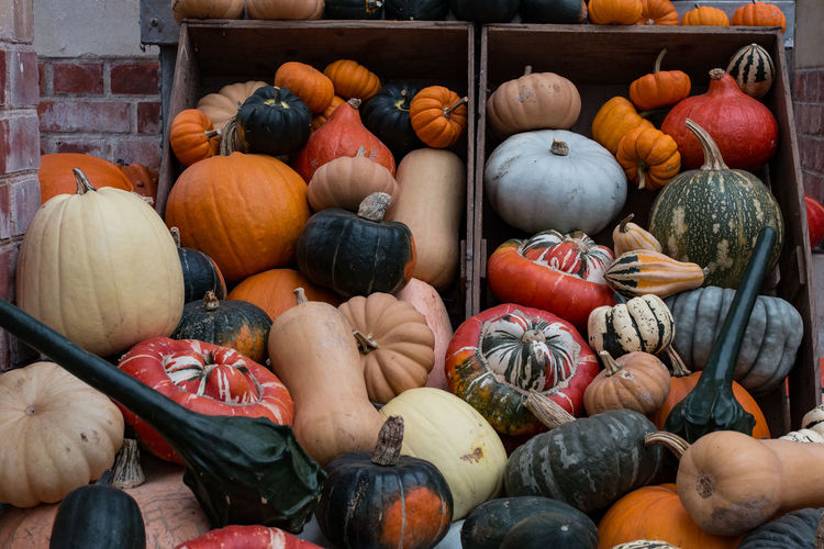 Squashes in open box at tyntesfield
