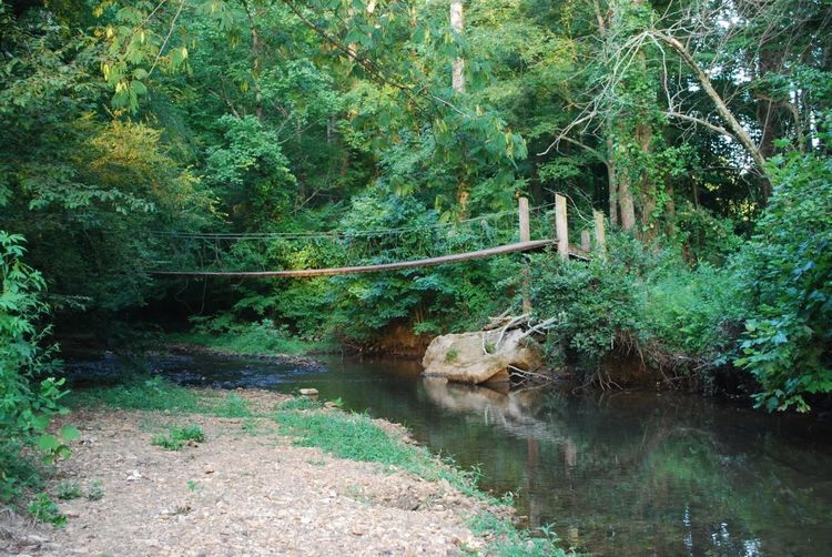 Wooden bridge over a secluded spot along Knox Creek Beauty In Nature Bridge Day Nature No People Outdoors Rocks Shore Stream Tree Wooden Bridge