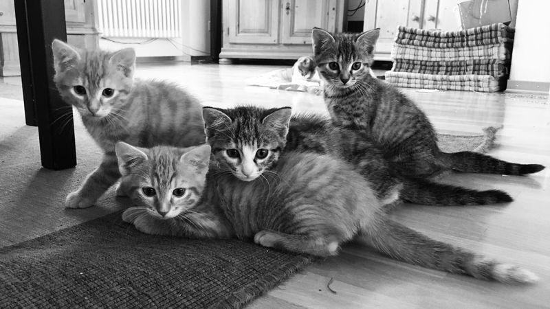 Busy Miau *-*