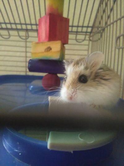 Curiosity behind bars Animal Themes Curiosity Pets