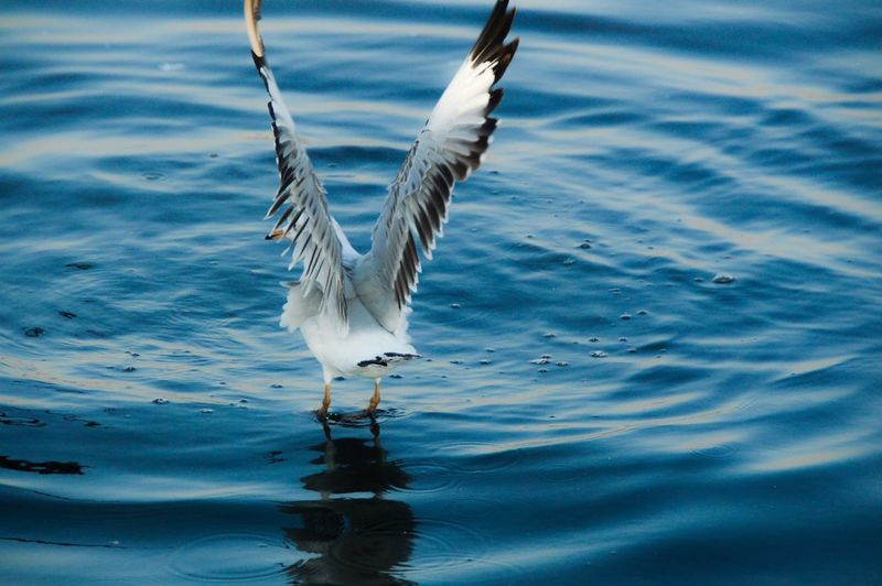 Close-up of heron on lake