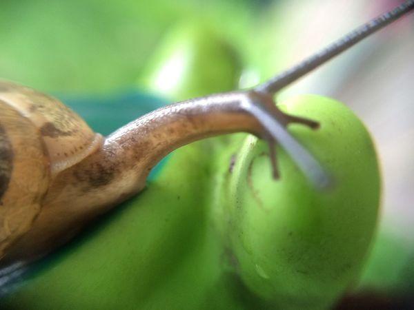 カタツムリ Snail IPhone