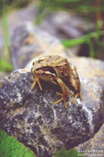 Frog HannaHBraBPhotography EyeEm Nature Lover