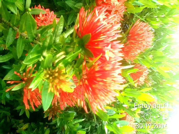 Flower Red Nature Plant Beauty In Nature Travel Destinations No People