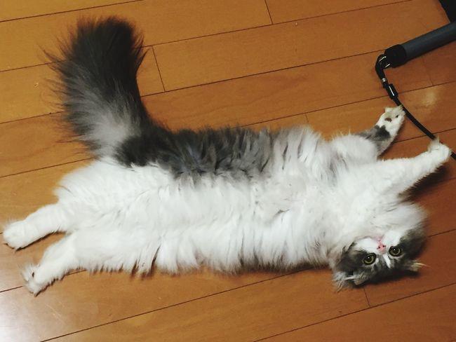 うちの子大丈夫かなぁ!(◎_◎;) 猫 Cat