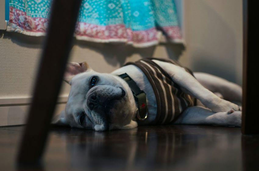 French Bulldog I Love My Dog Pets Corner Dogs Of EyeEm Photography Dog Love Taking Photos Mypets Dogslife Dog