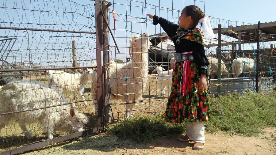 Native Navajo Reservation Beauty In Nature Nativeamerican  NavajoNation Close-up Taking Photos Lifestyles Mybabygurl People And Places Navajo Woman Nature Outdoors Fence Sheep🐑 Traditional Dance Navajo Child Multi Colored Navajo Jewelry Traditional Culture Traditional Values