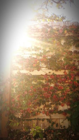 Beautiful Sunlight Nature On Your Doorstep The Leaves Change Colors Beautiful Nature Enjoying Life Check This Out Taking Photos Hanging Out Good Times