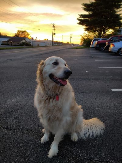 Dog on road at sunset