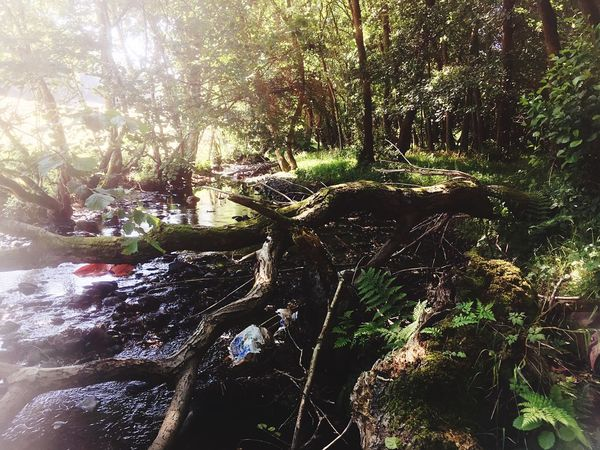 Forest Riverside River Nature Summer North Wales Wales WoodLand Trees Eyeemphoto