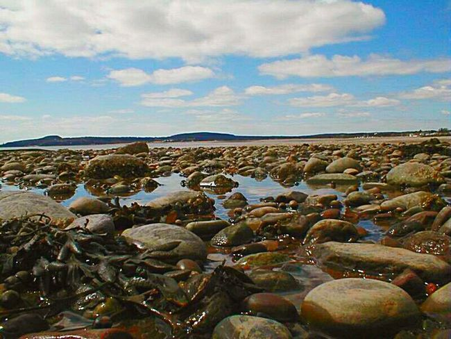 This was posted previously. This is near Saint John, New Brunswick, Canada. at the Bay of Fundy. Notable place. Canada Canada, Eh? New Brunswick Rocks Rocky Beach Sea Coast, Low Tide Low Tide