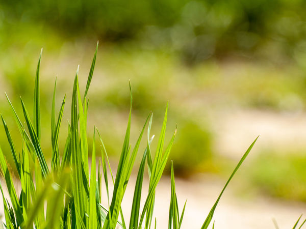 50+ Blade Of Grass Pictures HD | Download Authentic Images on EyeEm