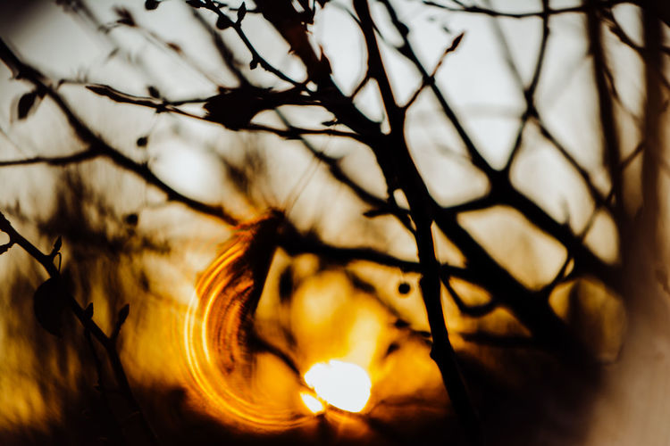 Capture Tomorrow No People Close-up Tree Selective Focus Nature Sunset Plant Illuminated Sky Branch Glowing Orange Color Beauty In Nature Flame Tranquility Outdoors Lighting Equipment Bare Tree Focus On Foreground