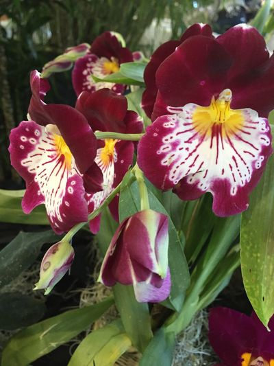 Flowers, Nature And Beauty Orchid Fort Mason San Francisco Taking Photos