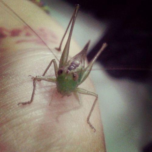 El personaje de hoy.... Mi primis! Nature Creatures Alotroladodelcharco Infarfaraway Indahouse Lovely Green Leticia Simplethings Missing