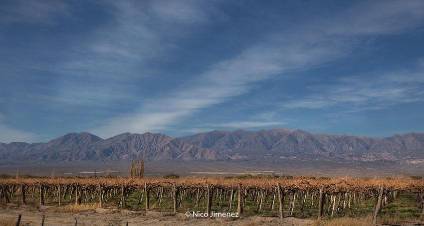 Cafayate, Salta, Argentina! Uvas Vinãs Argentina Argentina Photography Cafayate Cloud - Sky Landscape Mountain Nature No People Outdoors Scenics Sky Tranquility Vino Viñedos