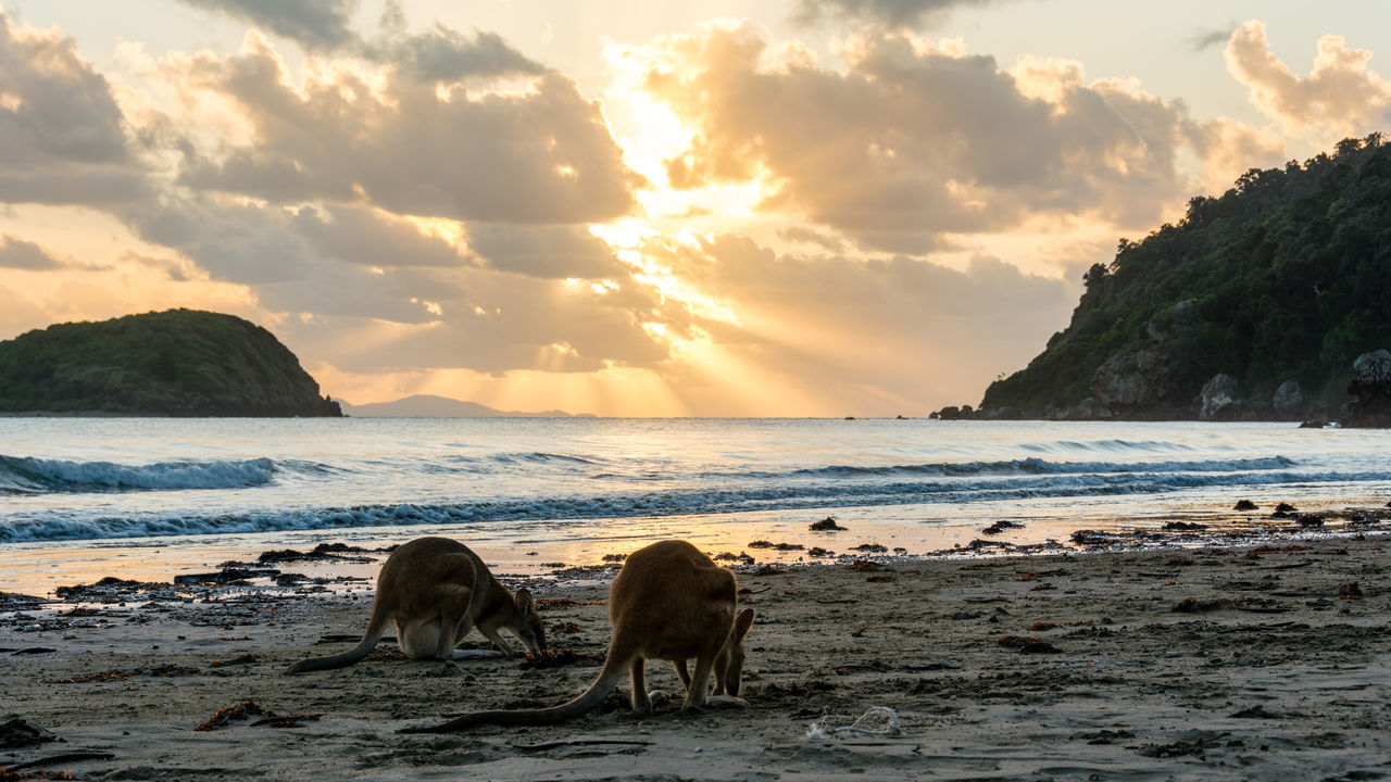 Kangaroos At Beach Against Sky During Sunset