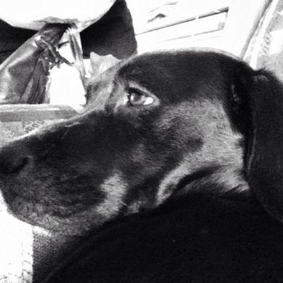Watching GBvsDET. Football Black Dog Girl instalove happy beauty bored cute