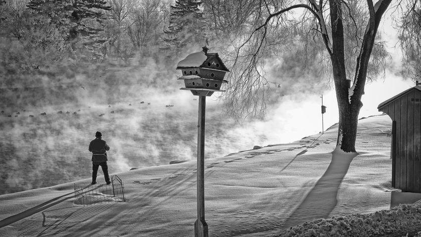 Growing Better Belowzero Cold Winter Lake View fog