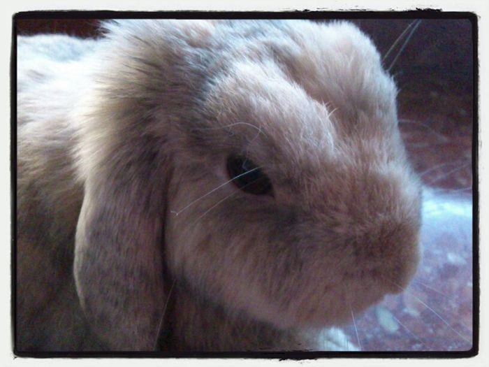 Animals Animal Pet Rabbit Bunny  Conill Conejo
